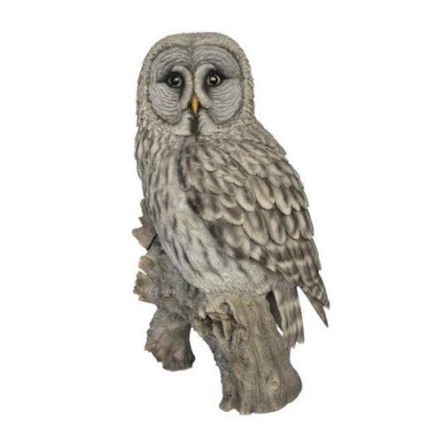 Owl - On stump